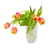 Beautiful pink  with yellow tulips Stock Images