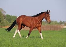 Beautiful pinto horse Stock Photos
