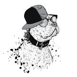 A beautiful pit bull in a cap. Vector illustration. A thoroughbred dog in clothes. Stock Image