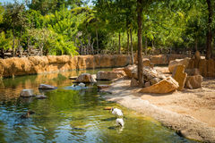 Beautiful place for chilling in a zoo, near water, surrounded by green trees. On a hot summer day Royalty Free Stock Image
