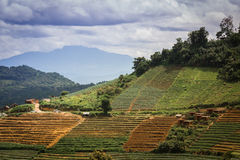 Beautiful place with small hill cabbage terraces farming with cl Royalty Free Stock Images
