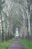 Beautiful places of the Baikal region. The greenery beautiful forest alley trail of the Baikal region Royalty Free Stock Photography