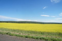 Beautiful places of the globe, Baikal. Beautiful places of the Baikal region, mustard fields, vegetation Stock Photography
