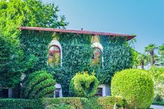 Decoratively trimmed bushes located on the background of the house. Beautiful places of the Nikitsky Botanical Garden, Yalta Crimea Royalty Free Stock Images