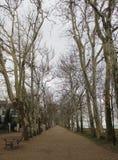 Beautiful plane trees. Near Balatonfoldvar royalty free stock image
