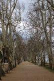 Beautiful plane trees. At Balatonfoldvar, Hungary royalty free stock photography