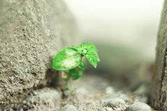 Beautiful plant with blurry background stock photography