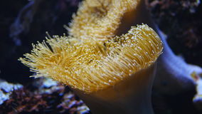 Beautiful plant coral. In the sea life stock video footage