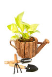 Beautiful plant in a flowerpot and garden tools. On white royalty free stock images
