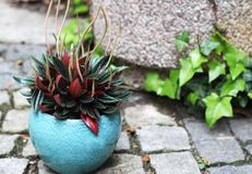 Beautiful plant in the flowerpot Stock Photos