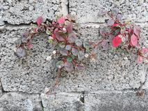 Beautiful plant with flowers in old Wall Street stock photography