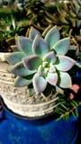 Beautiful plant stock photo