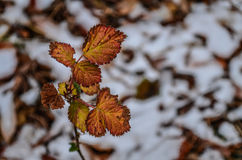 Beautiful Plant on snowy trail. Beautiful colorful plant in the wilderness with bokeh Stock Photo