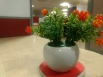 A beautiful plant at work place royalty free stock photo