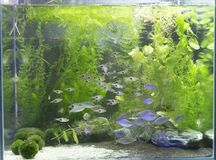 Beautiful Planted Aquarium With Many Fishes Stock Images