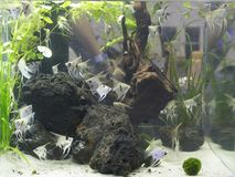 Beautiful Planted Aquarium With Many Fishes Stock Photos