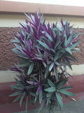 Beautiful plants Stock Photography