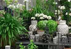Beautiful plants and ceramics in a flower shop Royalty Free Stock Photos