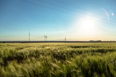Beautiful plants in a field royalty free stock image