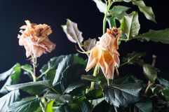 Beautiful plants with fragrant flowers as indoor stock photography