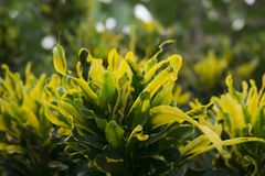 Closeup Photo of Beautiful Leaves. Beautiful plants from a garden that is in maturity royalty free stock photography