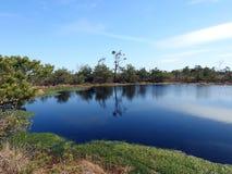 Aukstumalos swamp in spring , Lithuania Stock Photo