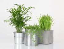 Beautiful plants in metal pots Stock Photos