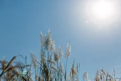 Beautiful plants on the sky background Royalty Free Stock Image
