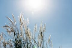 Beautiful plants on the sky background Royalty Free Stock Images