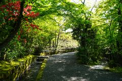Beautiful pleasant walkway road under green tree and red flower tunnel with fresh water canal ditch cover with moss and lichen. On sunshine day, Kurokawa onsen Stock Photo