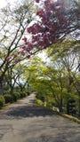 Beautiful Plum Flower in the park Stock Photos