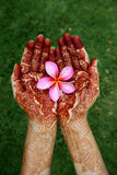 Beautiful plumeria flower in henna hand Royalty Free Stock Image