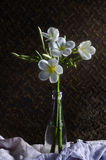 Beautiful plumeria flower.Still life Royalty Free Stock Images