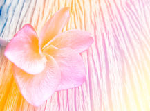 Beautiful Plumeria flowers with Soft Focus Color Filtered Stock Image
