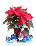 Beautiful poinsettia with christmas balls Stock Image