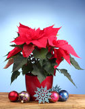 Beautiful poinsettia with christmas balls Royalty Free Stock Photo