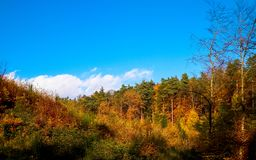 Beautiful Polish golden autumn. Golden, autumnal trees against blue sky with white clouds. Nature and travel concept royalty free stock photography