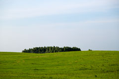 Beautiful Polish landscape with forest and green grass field Stock Image