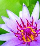 Beautiful pollens Stock Photography