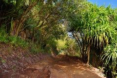 Beautiful Pololu loop trail located near Kapaau, Hawaii, that features beautiful wild flowers and stunning views to the Pololu Val Stock Photos