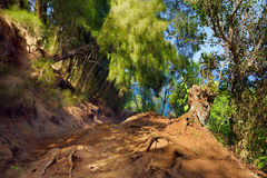 Beautiful Pololu loop trail located near Kapaau, Hawaii, that features beautiful wild flowers and stunning views to the Pololu Val Royalty Free Stock Images