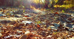Dried pond bank in the woods! royalty free stock image