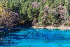 Beautiful pond in Jiuzhaigou national park Royalty Free Stock Photography