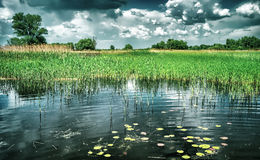 Beautiful pond landscape Royalty Free Stock Images