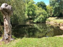Beautiful pond in in park Royalty Free Stock Photography