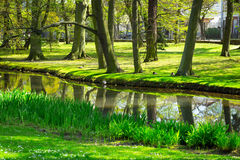 Beautiful pond in the park Royalty Free Stock Images