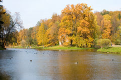 Beautiful pond and yellow trees. Royalty Free Stock Photos