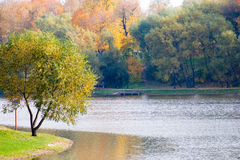 Beautiful pond and yellow trees. Stock Photos