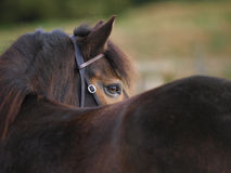 Beautiful Pony Stock Images