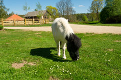 Beautiful a pony on a farm Stock Photo